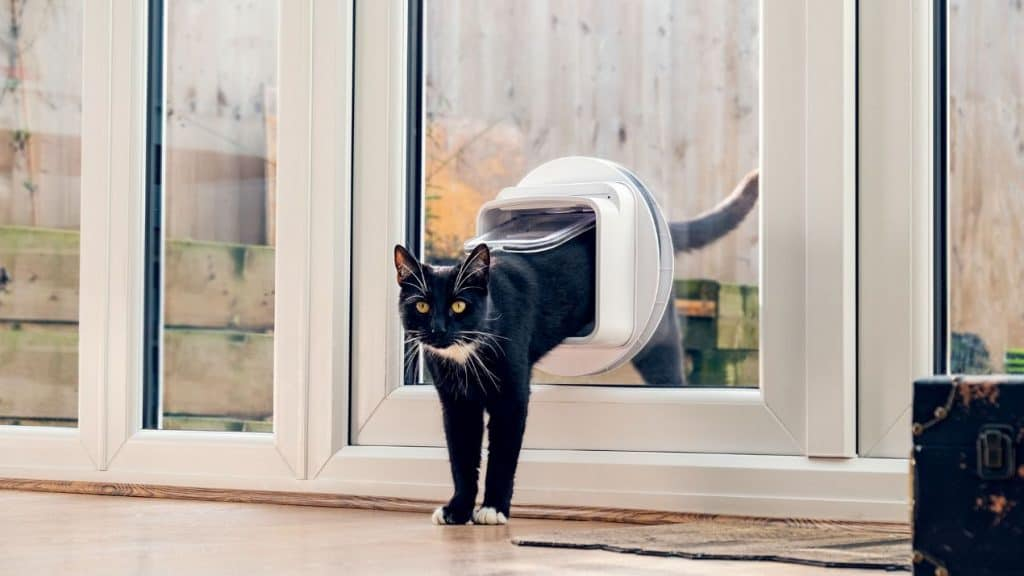 How To Train Your Cat To Use a Microchip Cat Flap